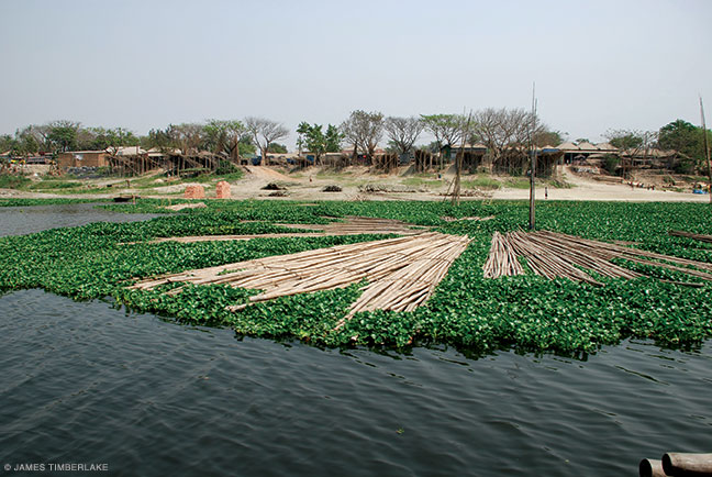 Bamboo floats on invasive water hyacinth on the Bongshi River.
