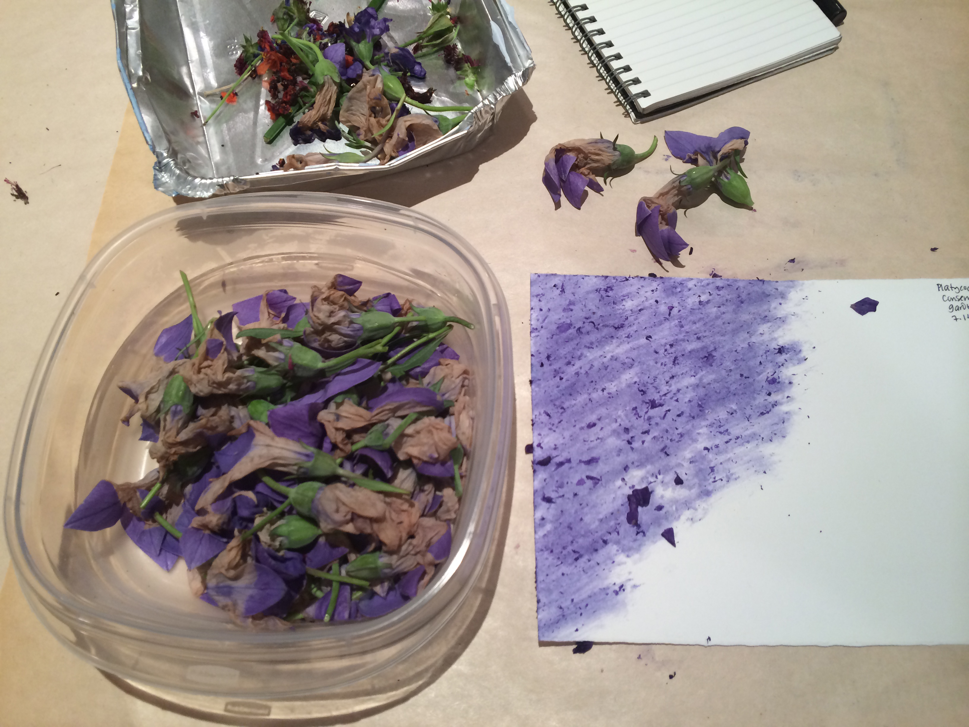 photo of flower staining with Conservatory Garden flowers