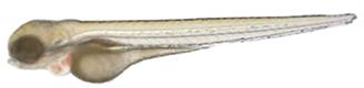 kb_zebrafish2