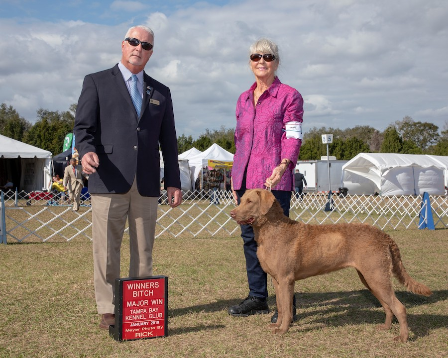 "Susan B. Peterson CW'64 poses with her dog, who has brown fur, and a man in a suit, for a picture after their win, next to a sign that says ""Winner's Bitch: Major Win, Tampa Bay Kennel Club, January 2019."""