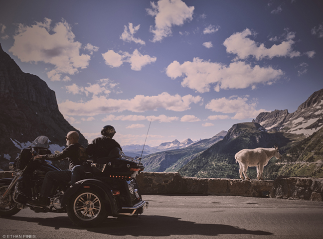 Photo of motorcyclist and goat on the highway by Ethan Pines